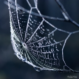 11500_web